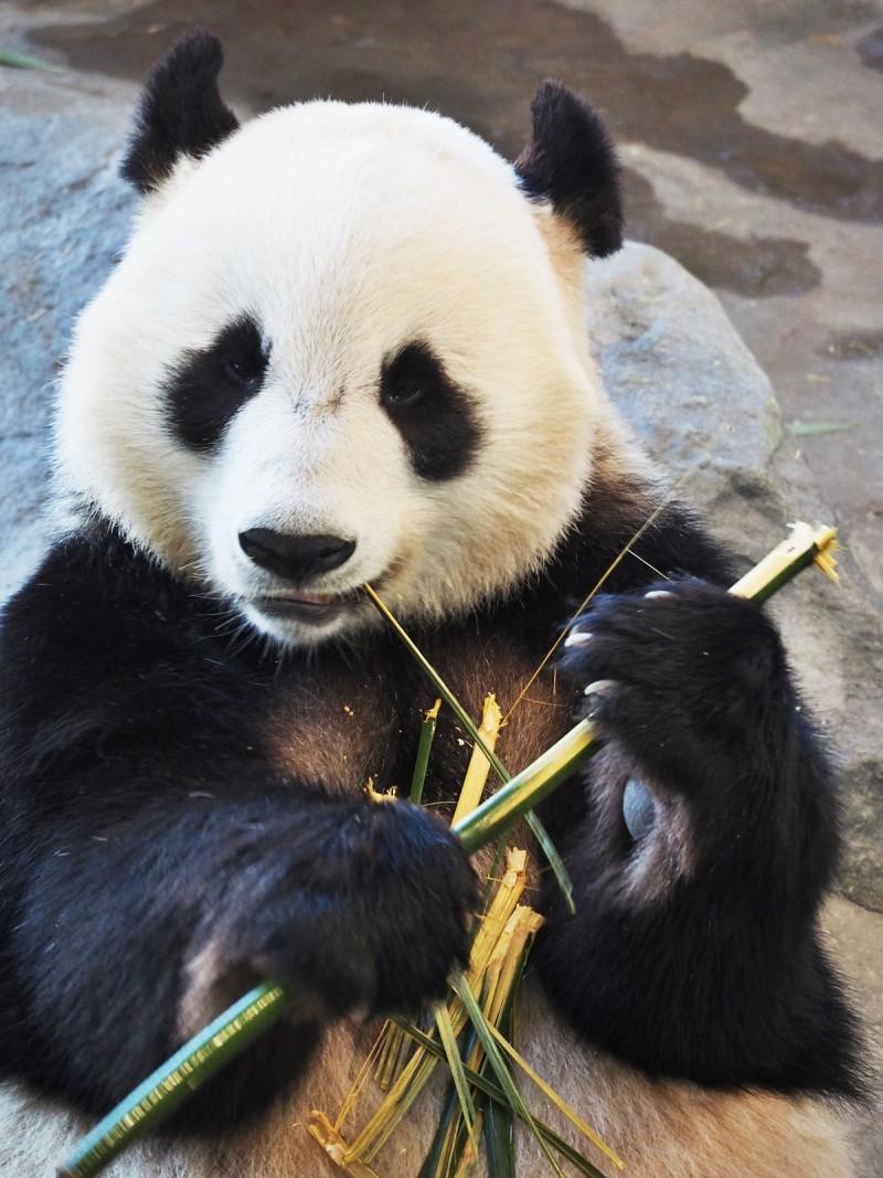 Pandat ähtäri