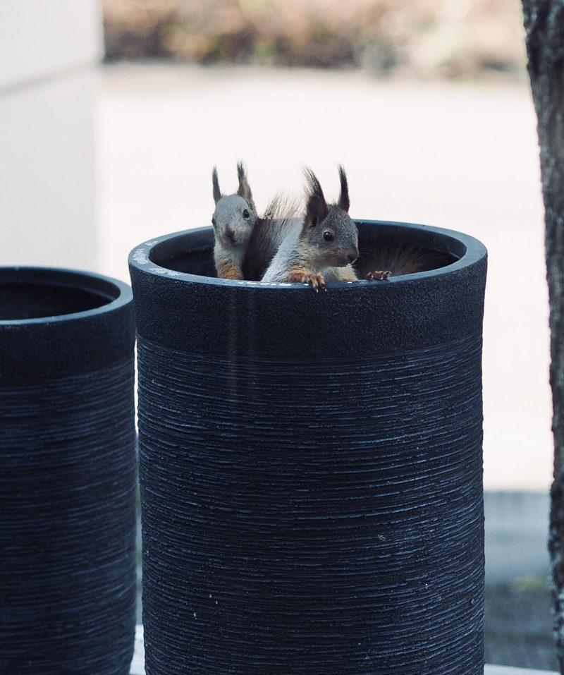orava pesä
