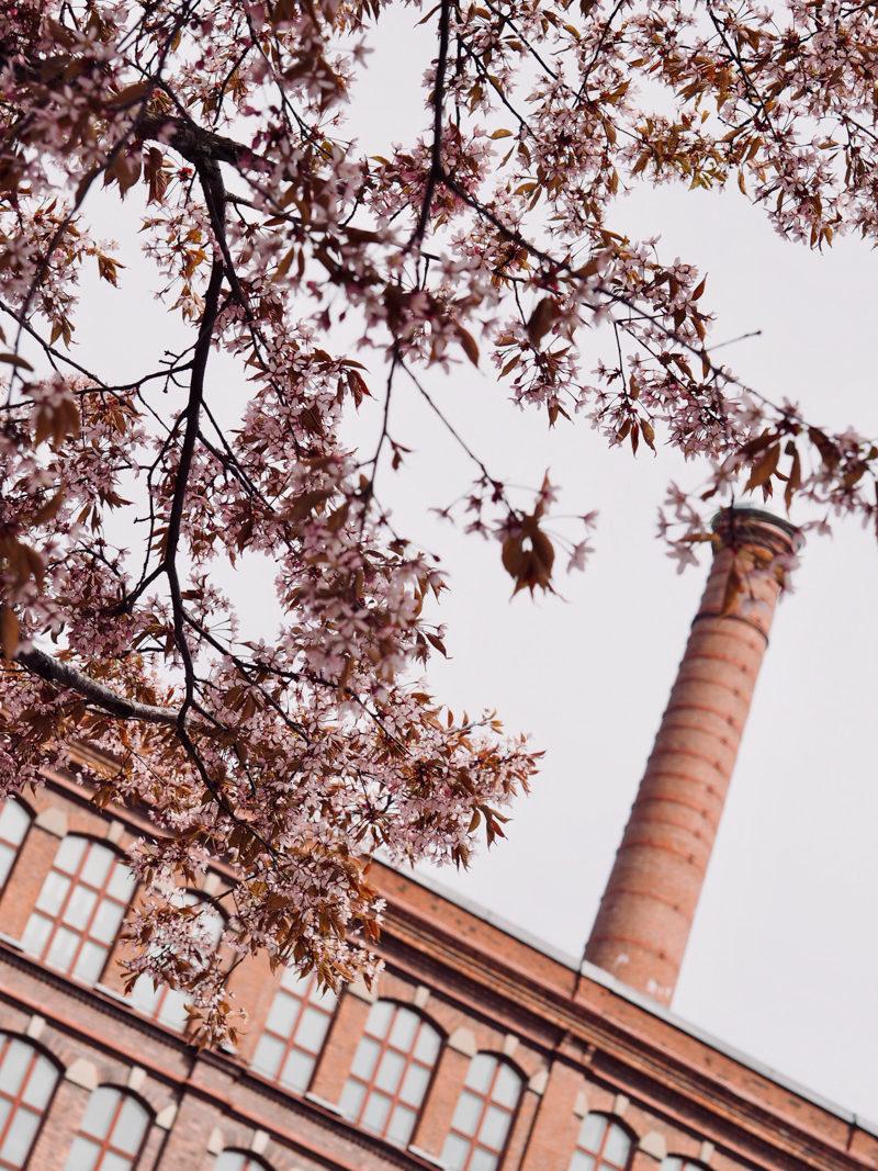 kirsikkapuut frenckell
