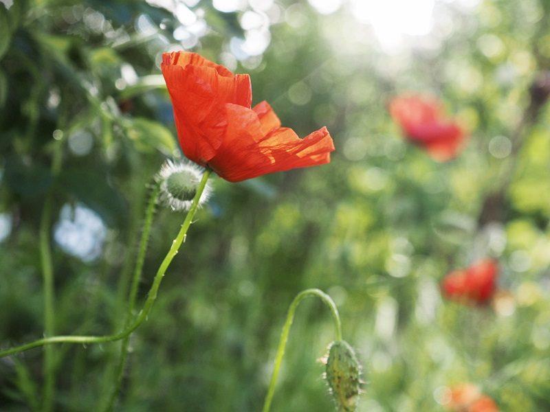 kukkaniitty pirkanmaa 2020
